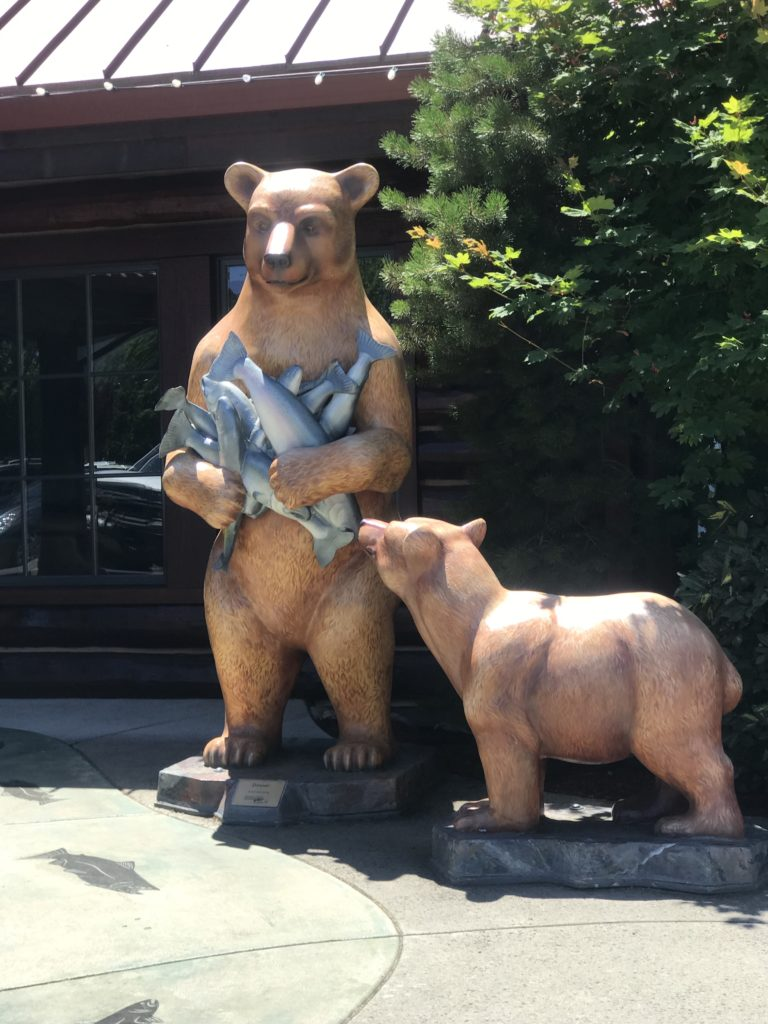 Bears and Salmon in Grants Pass Oregon