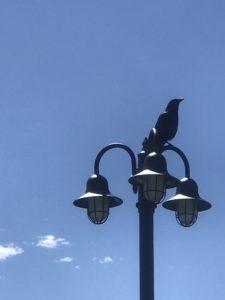 Raven in Saratoga, CO
