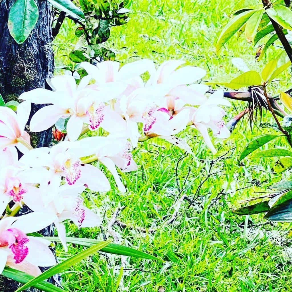 Hale 'Ohu Garden Orchids